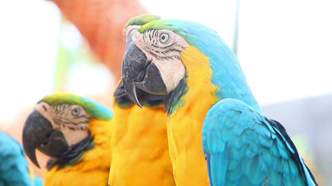 colorful parrot macaw sequence Footage