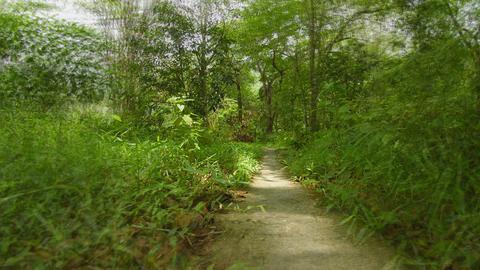 The path through a tropical park. Thailand. Phuket Footage