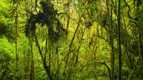 Thickets of tropical rainforest Footage