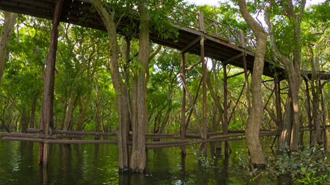 View of high wooden bridge over the lake and fores Footage