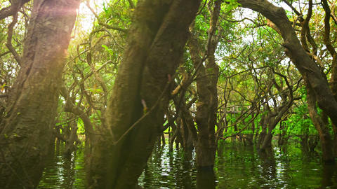 Cambodia. Flooded forest and wooden bridge Footage