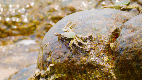 Crabs feed on the stones in the surf. Thailand. Ph Footage