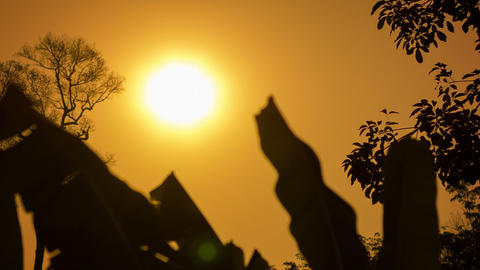 Hot Sun Over The Tropical Forest In The Dry Season stock footage