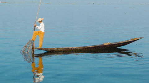 Burmese fisherman catches fish using a trap. Inle Footage