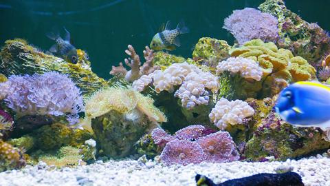 Marine Fish In The Beautiful Underwater Scenery In stock footage