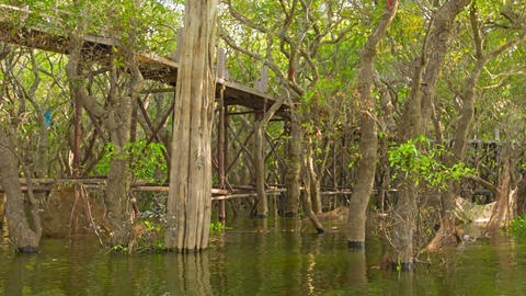 Flooded forest and a high wooden bridge. Cambodia Footage