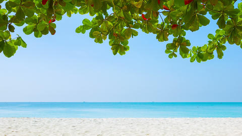 White sand beach and tropical vegetation on the ed Footage