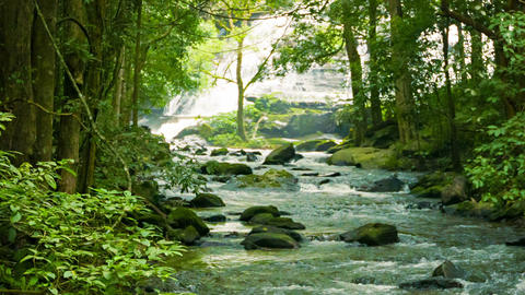 Mountain stream near a waterfall in the rainforest Footage