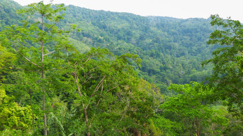 Tall trees in the tropical jungle Footage