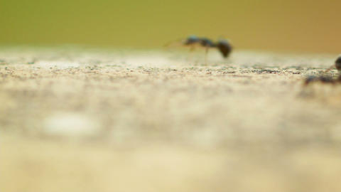 Fast Marching Ants stock footage