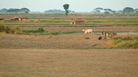 MON STATE. BURMA - CIRCA JAN 2013: Peasants Workin stock footage