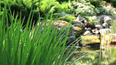 Sedge on a background of a mountain stream Footage