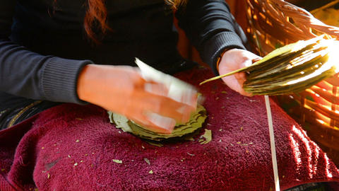 Sorting Of Leaves For The Manufacture Of Cigars. I stock footage