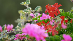 4K colorful flowers trembling in the wind Footage