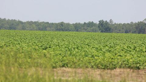 vast agriculture field Footage