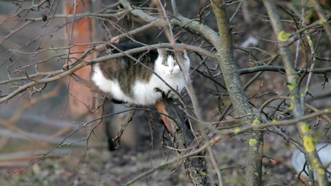 Cats sitting on a tree 1 Stock Video Footage