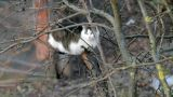 Cats Sitting On A Tree 1 stock footage