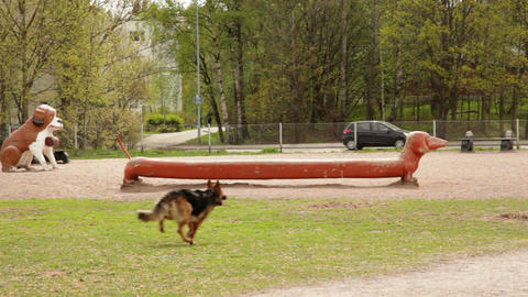Dog running in a park 1 Stock Video Footage