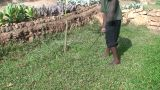 Malawi: African Boy Cuts Grass In Yard stock footage