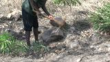 Malawi: African Worker Removes Stones 2 stock footage