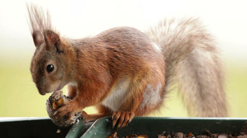 Squirrel in a balcony 2 Stock Video Footage