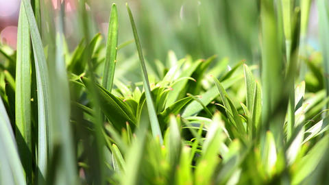 green grass in the garden close-up Footage