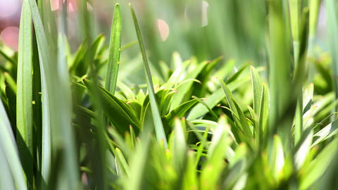 green grass in the garden close-up Stock Video Footage