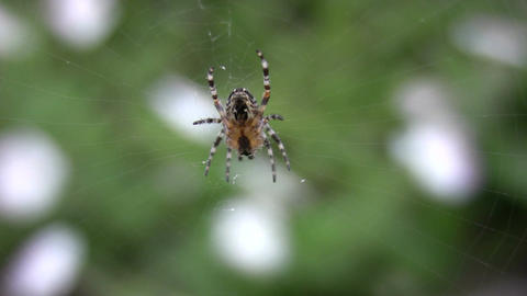 Spider on the net Stock Video Footage