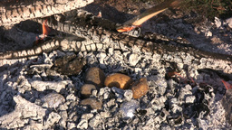 Cooking potatoes in a campfire 1 Stock Video Footage