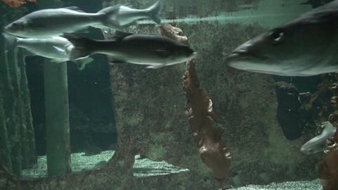 Sea life, close-up Footage