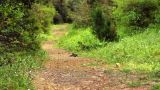 Walk Down A Path stock footage
