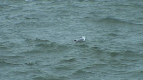 Seagull swimming on stormy day 2 Stock Video Footage