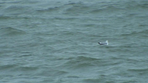 Seagull swimming on stormy day 2 Footage