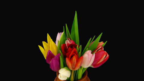 Time-lapse of opening colorful tulips bouquet 4 Stock Video Footage
