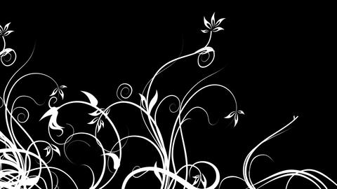 black and White Stock Video Footage