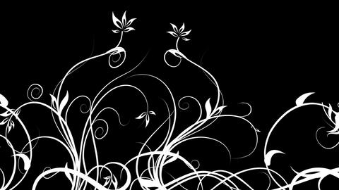 black and White Animation