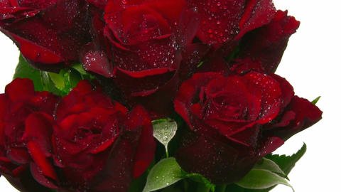 Rotating bouquet of red roses with water drops, loop 5 Footage