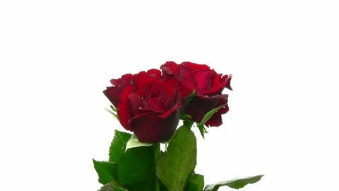 Rotating 3 red roses with water drops, endless loop 15 Stock Video Footage