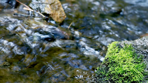 expression trees in water Stock Video Footage