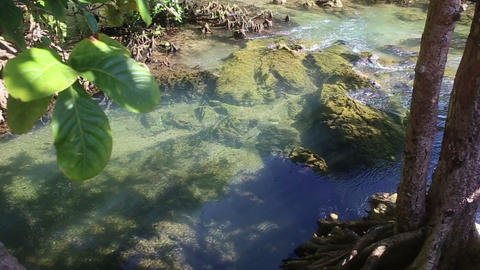clear water flows among the mangrove roots Footage