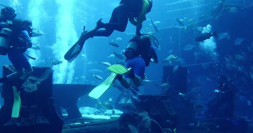 Swimming In An Aquarium Footage