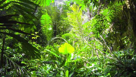 1920x1080 video - Tropical green rain forest jungl Footage