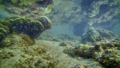 Little Fishes In The Andaman Sea At Low Tide stock footage