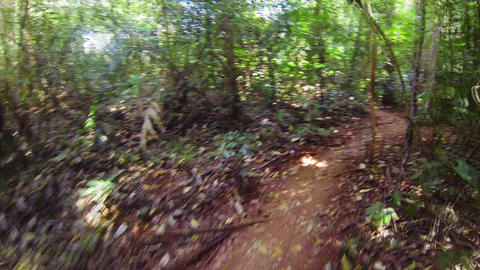 Fast running along a narrow path in the jungle Footage