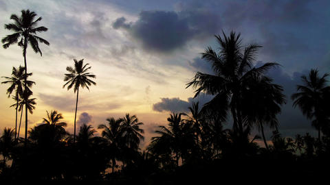 Silhouettes of palm trees against the background o Footage