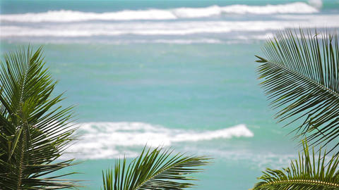 Waves on tropical beach with palm leaves Footage
