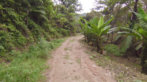 Movement on rural road through the rainforest Footage