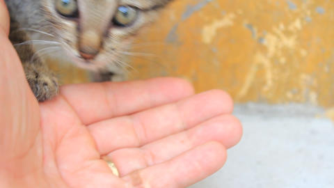 stroking kitten Footage
