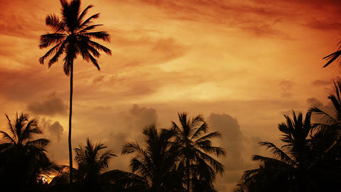 Tropical sunset sky with palm trees silhouette Footage