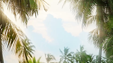 Blinding light of the sun through the palms Footage